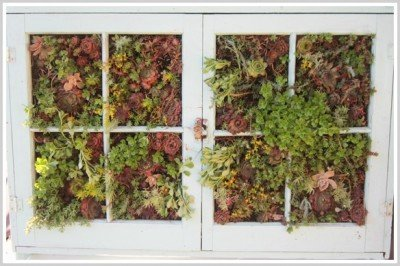 Second Chance to Dream: Vertical Succulent gardening