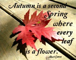 Second Chance to Dream: Fall Printables