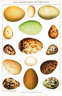 Animal-Bird-Eggs-Educational-Plate-American-game-birds