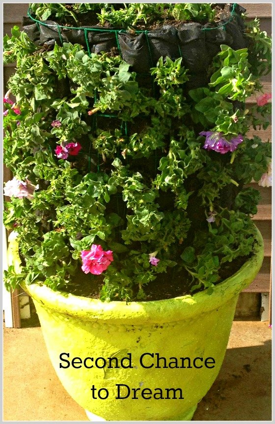 Second Chance to Dream: Knock off Flower Tower #containergardening