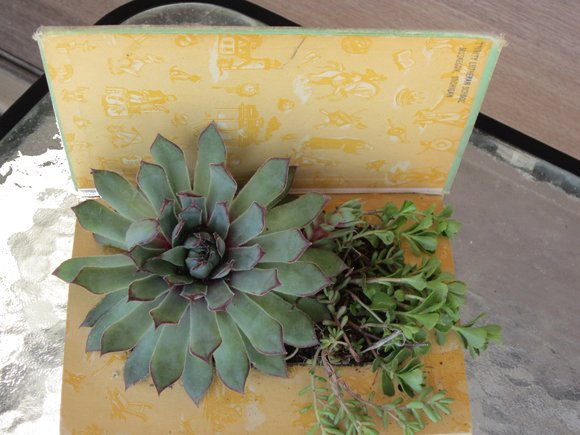 succulent+book+planter+1 {Featured On}