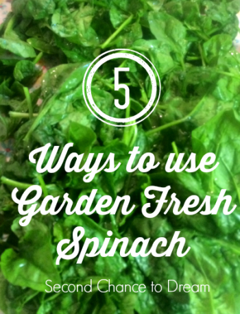 Second Chance to Dream: 5 Ways to Use Garden Fresh Spinach #gardenfresh #spinach