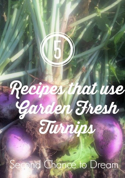 Second Chance to Dream: 5 Recipes that use Garden Fresh Turnips