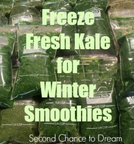 Second Chance to Dream: Freeze Fresh Kale for Winter Smoothies