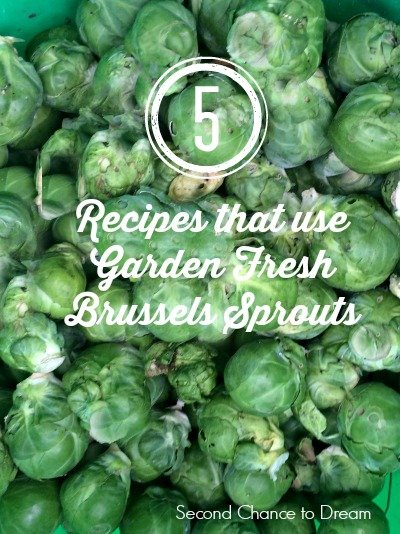 Second Chance to Dream:  5 Recipes that use garden fresh Brussels sprouts