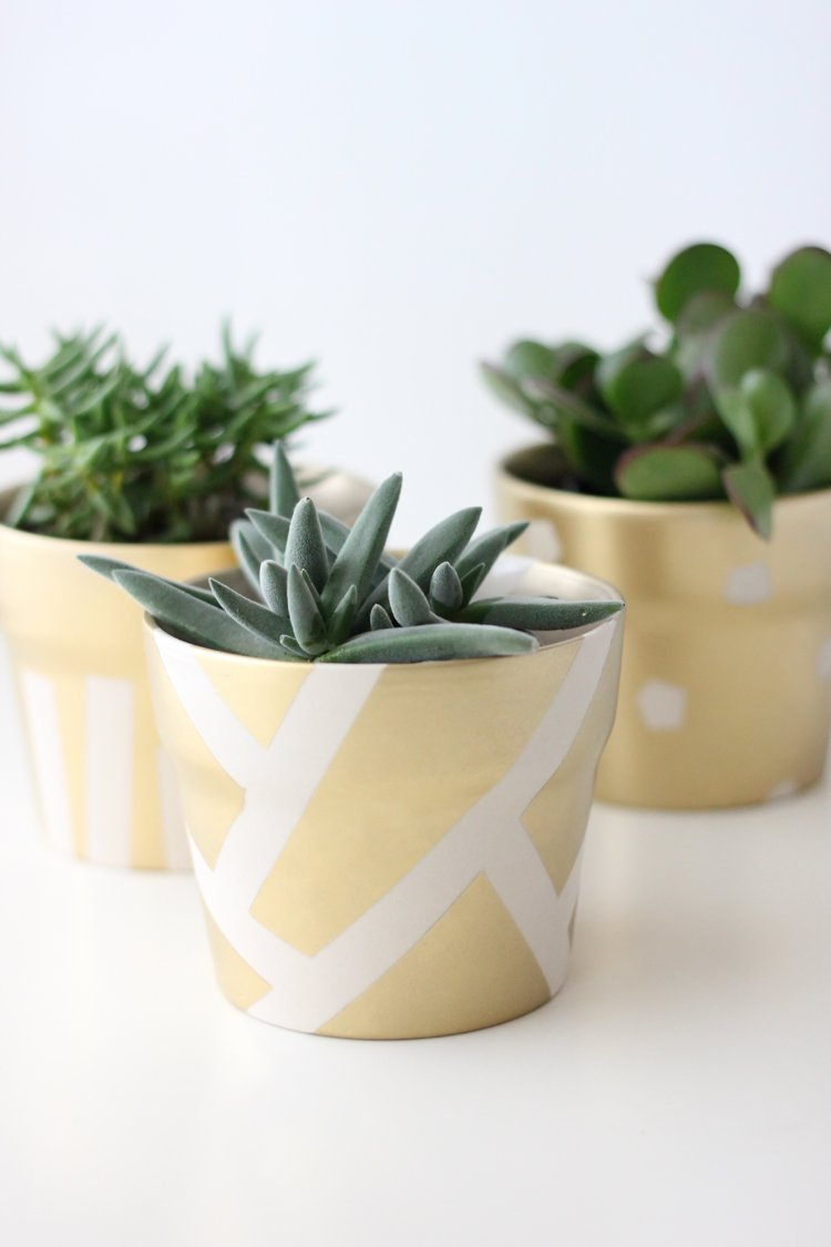 gold pot succulents (27 of 30)