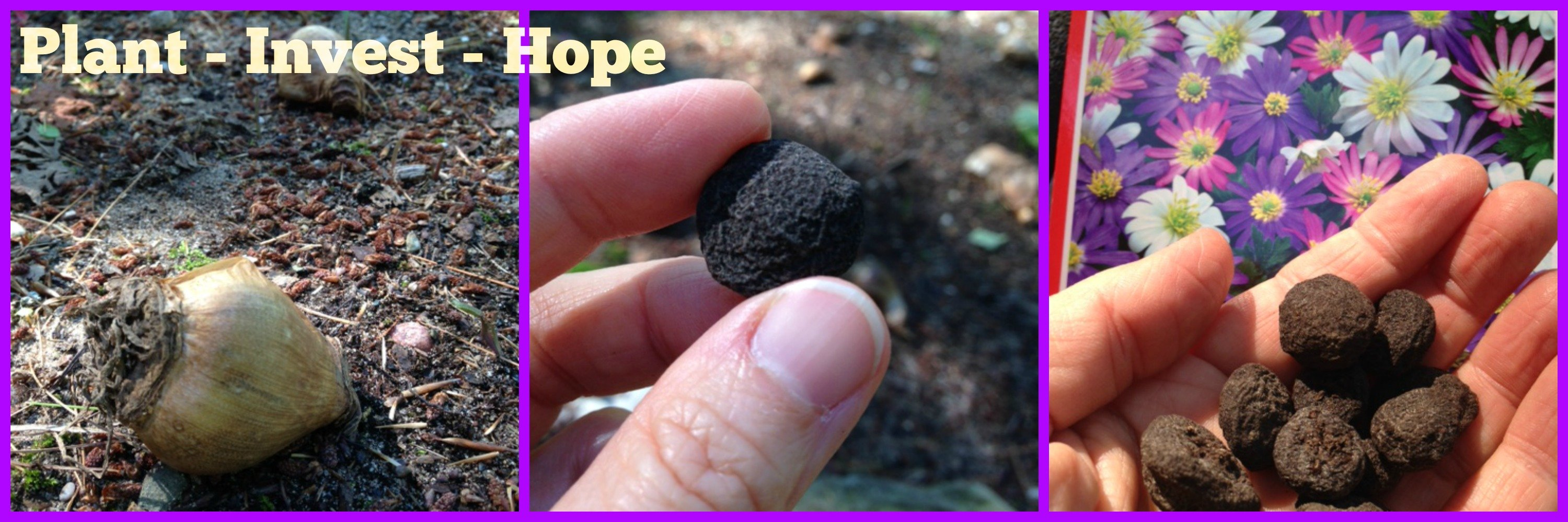 Second Chance to Dream: Plant-Invets-Hope
