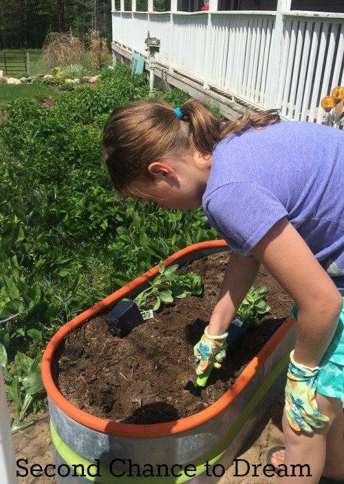 creating an herb garden