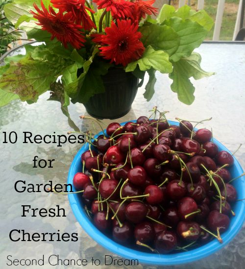 Garden Fresh Cherries
