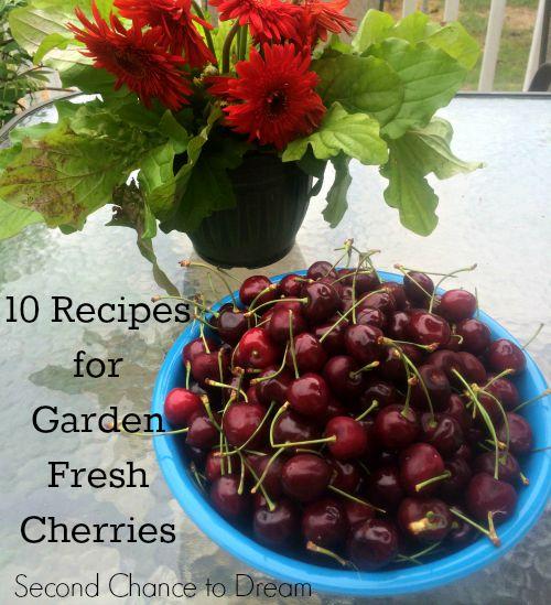 Garden Fresh Cherries