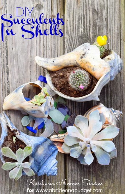 succulents-in-shells